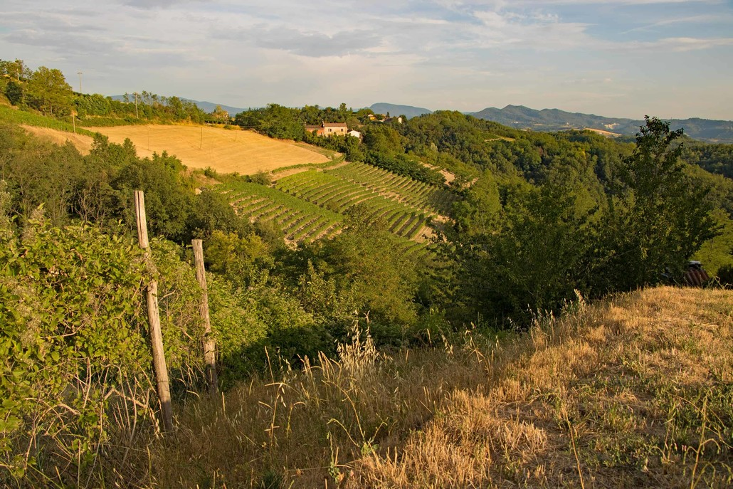 Piedmont with Wine growing in Italy, the region of slow food