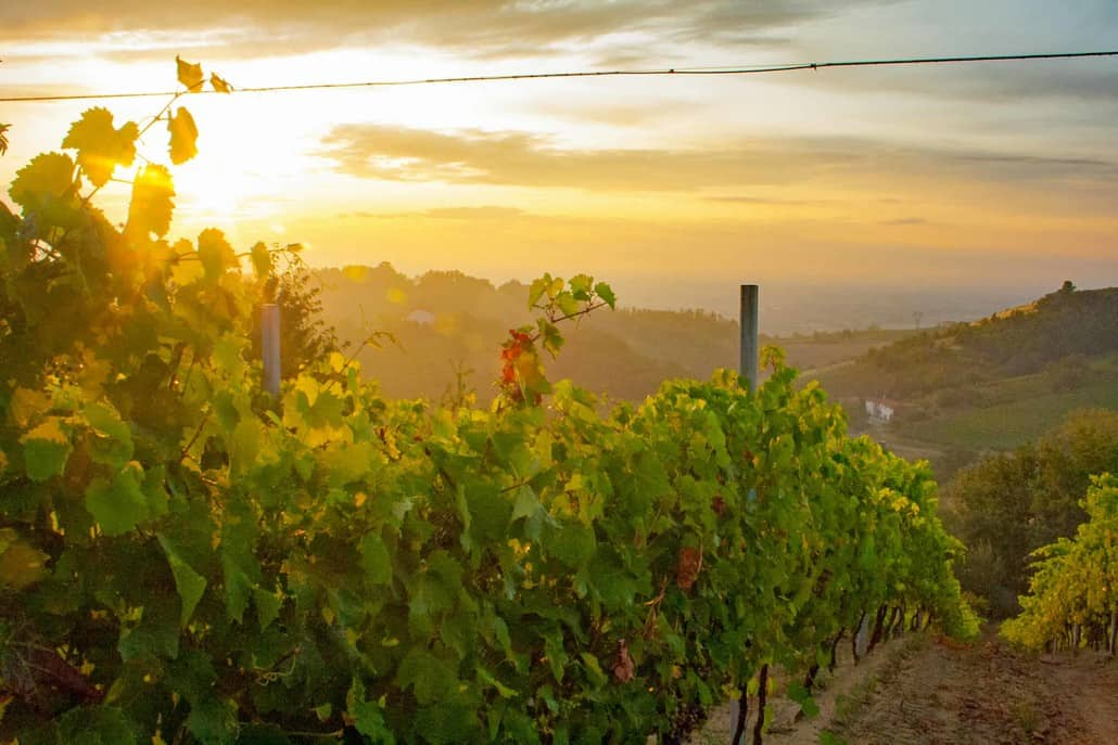 The Italian region Piedmont is for lovers of wine and gourmet
